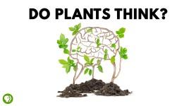 do plants think
