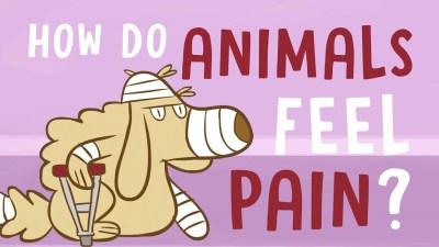 how do animals feel pain