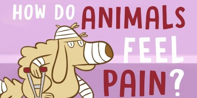 how do animals feel pain