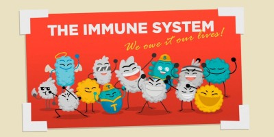 How our immune system works