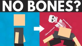 what if you didn't have bones