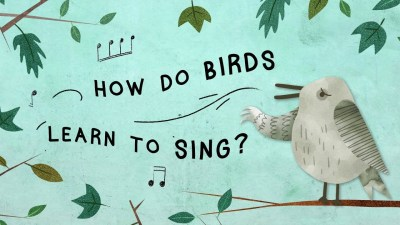 How Do Birds Learn To Sing?