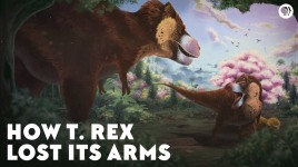 How T-Rex Lost Its Arms