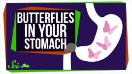 Why Do You Feel Butterflies In Your Stomach?