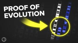 3 Incredible Examples of Evolution Hidden In Your Body