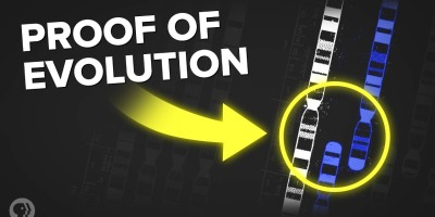 3 Incredible Examples of Evolution Hidden In Your Body