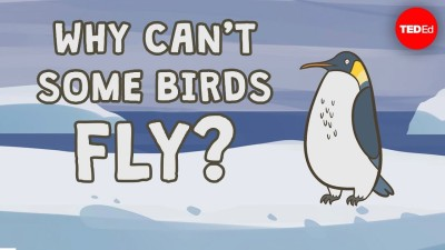 why can't some birds fly