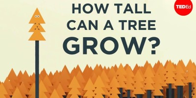 How tall can a tree grow?