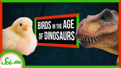 The Birds That Lived in The Age of Dinosaurs