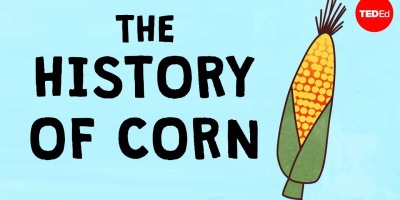 The history of the world according to corn