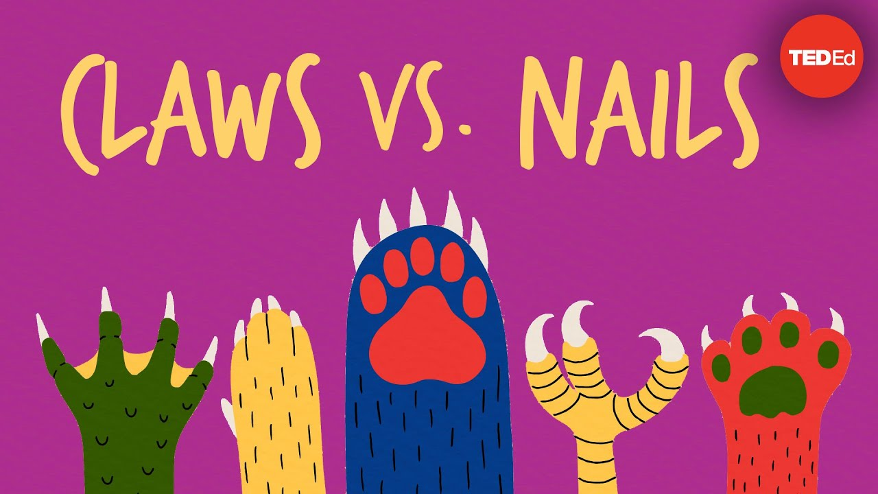 Claws vs. Nails