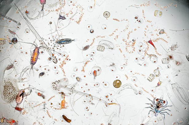 Single Drop Of Seawater Magnified 25 Times Reveals Stomach-Churning Microscopic Creatures