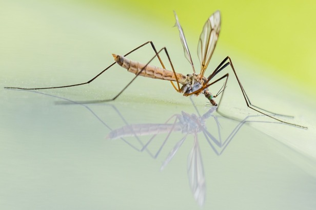 Swatting at mosquitoes can teach them to stay away