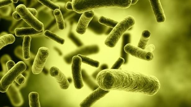 A Molecule That Can Destroy Biofilms And Antibiotic-Resistant Bacteria