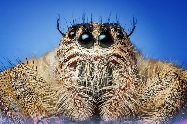 Spiders eat 400-800 million tons of prey every year [Image via Pixabay]