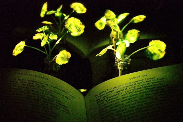 Glowing Plants Created Using The Same Enzymes Fireflies Use To Give Off Their Shine