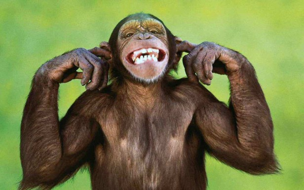 Human Brain More Similar To Monkeys' Than Previously Believed
