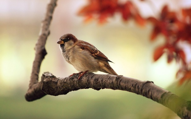 Why Birds Sing In Early Morning