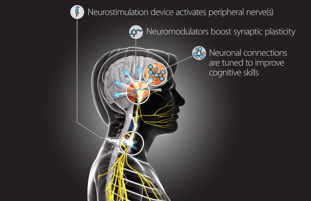DARPA want to hack your brain to help you learn faster [Image – DARPA's TNT (Targeted Neuroplasticity Training) Concept Diagram]