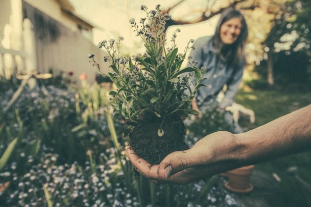 Having A Garden Linked To Better Health And Well-Being