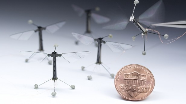 Tiny Robots Programmed To Move And Think Like Real Insects