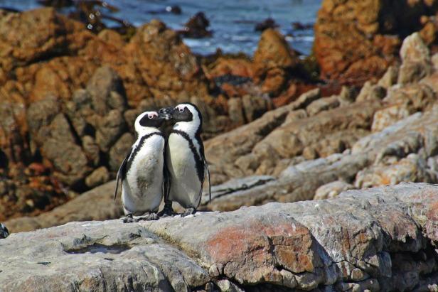 penguins-1103198_1920