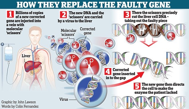 Researchers Make First-Ever Attempt At Editing Gene Inside The Body Of A Living Patient