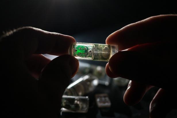 Ingestible Sensor by MIT [Image: Lillie Paquette/MIT]