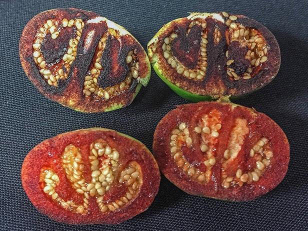 08 - Bush Tomato (Solanum ossicruentum)