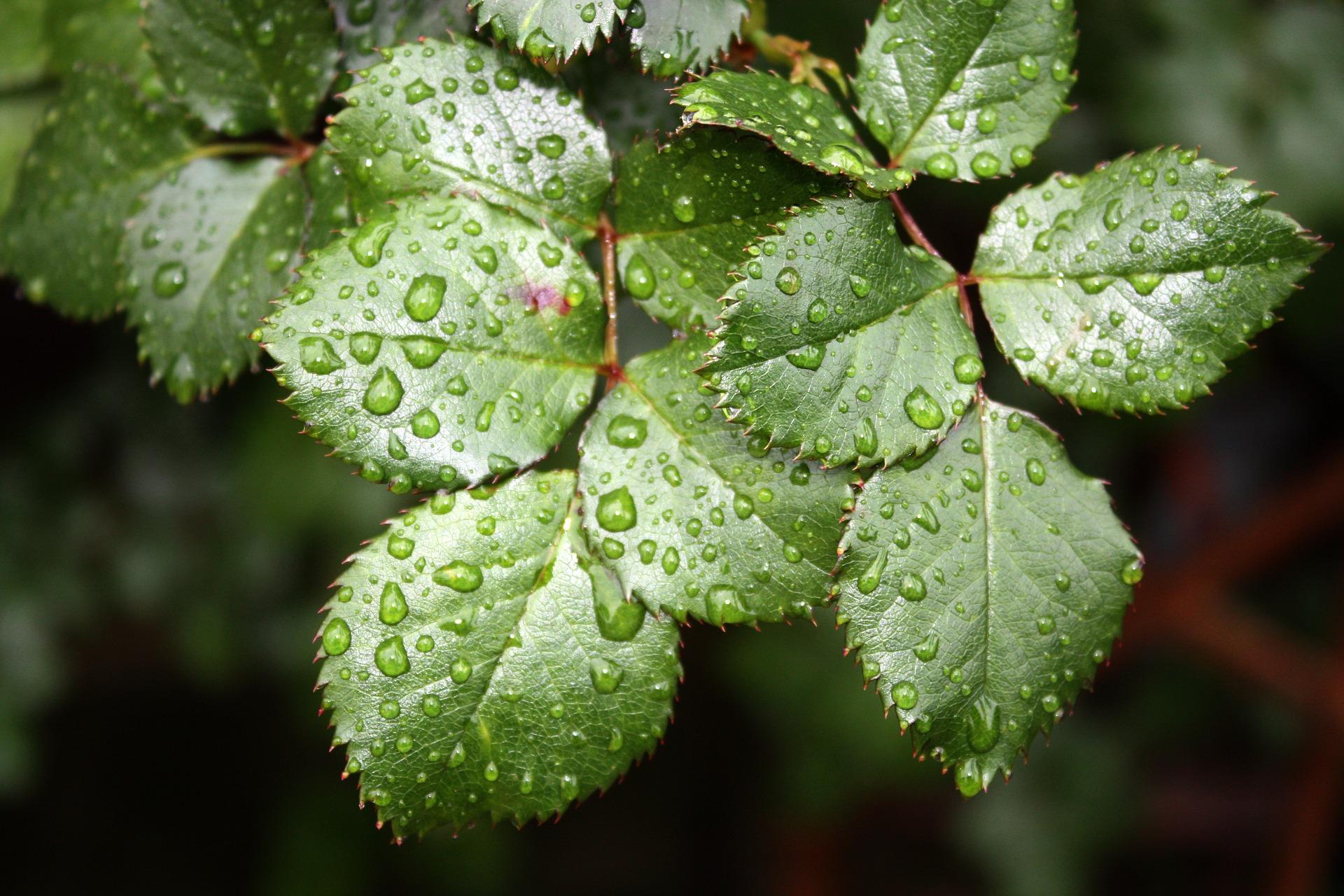 Plants Panic When It Rains