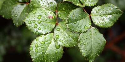 plants-panic-when-it-rains