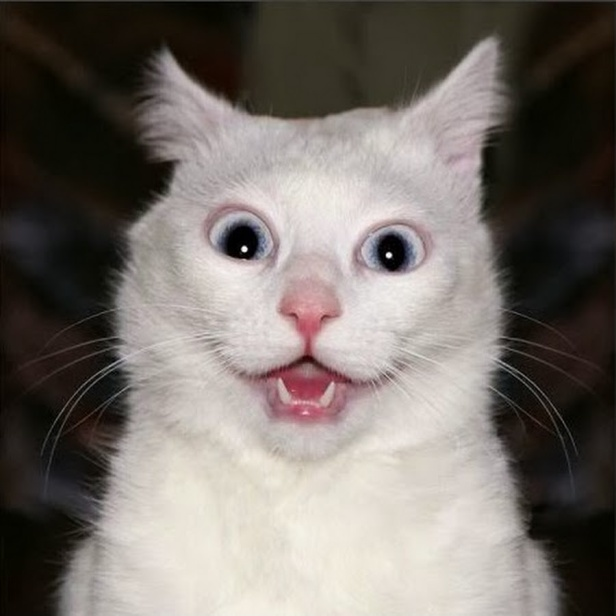 Study Says Your Cat Wants You Dead (Picture - Surprised dramatic cat)