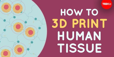 3d bioprinting - how to 3d print human tissue