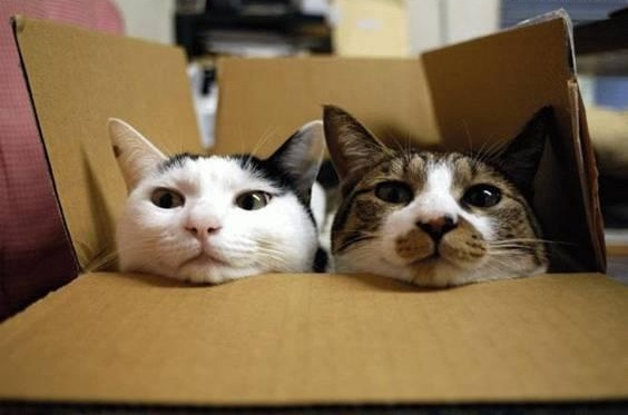 Cats Love Boxes Because Boxes Make Them Feel Safe And Secure And Help Their Anxiety