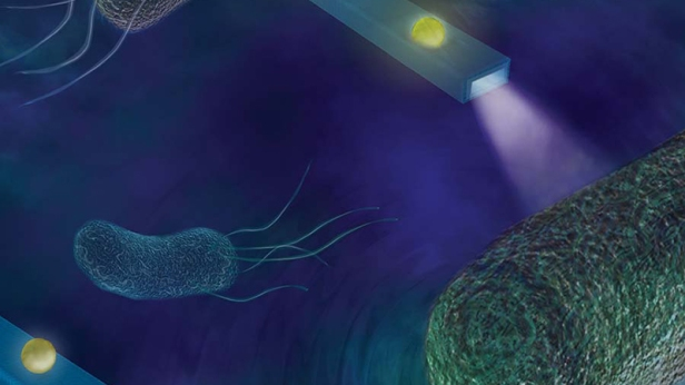 Nano-sized optical fibers detecting femtonewton-scale forces produced by swimming bacteria