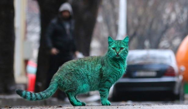 Cat With Green Fur in Varna, Bulgaria