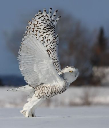 Study has revealed how owls' wings could help reduce noise from aircraft, wind turbines