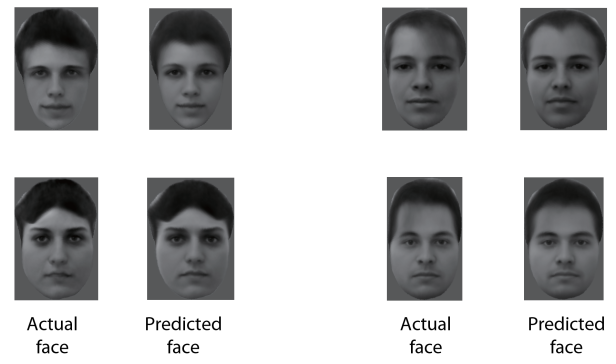 How Brain Recognizes Faces
