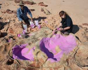 World's World's biggest dinosaur footprints have been discovered in north-western Australia. Image Shows Dinosaur footprints on the coast of Australia's Kimberley region [Image by Steve Salisbury]